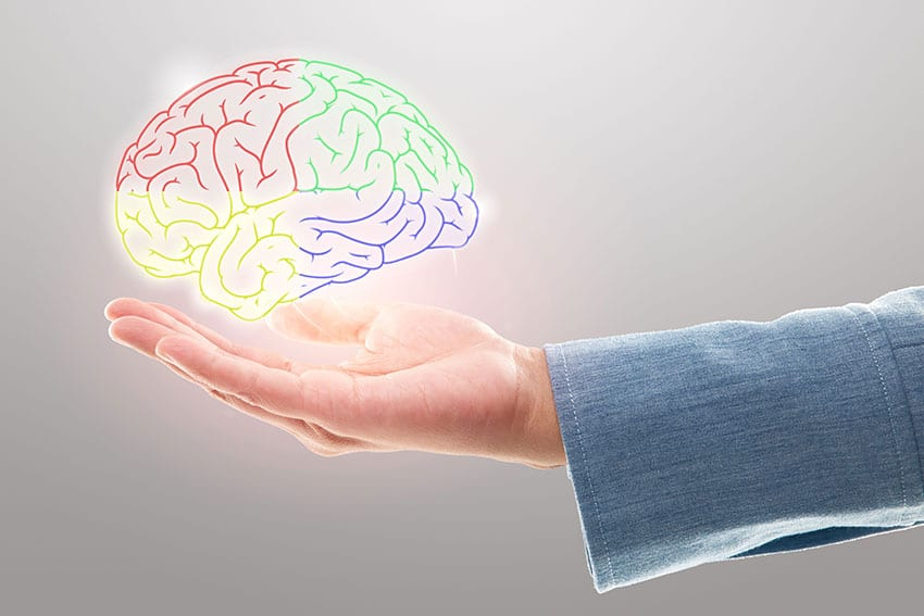 a hand holding up a multi colored brain
